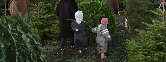 Mangler du at få styr på juletræet?
